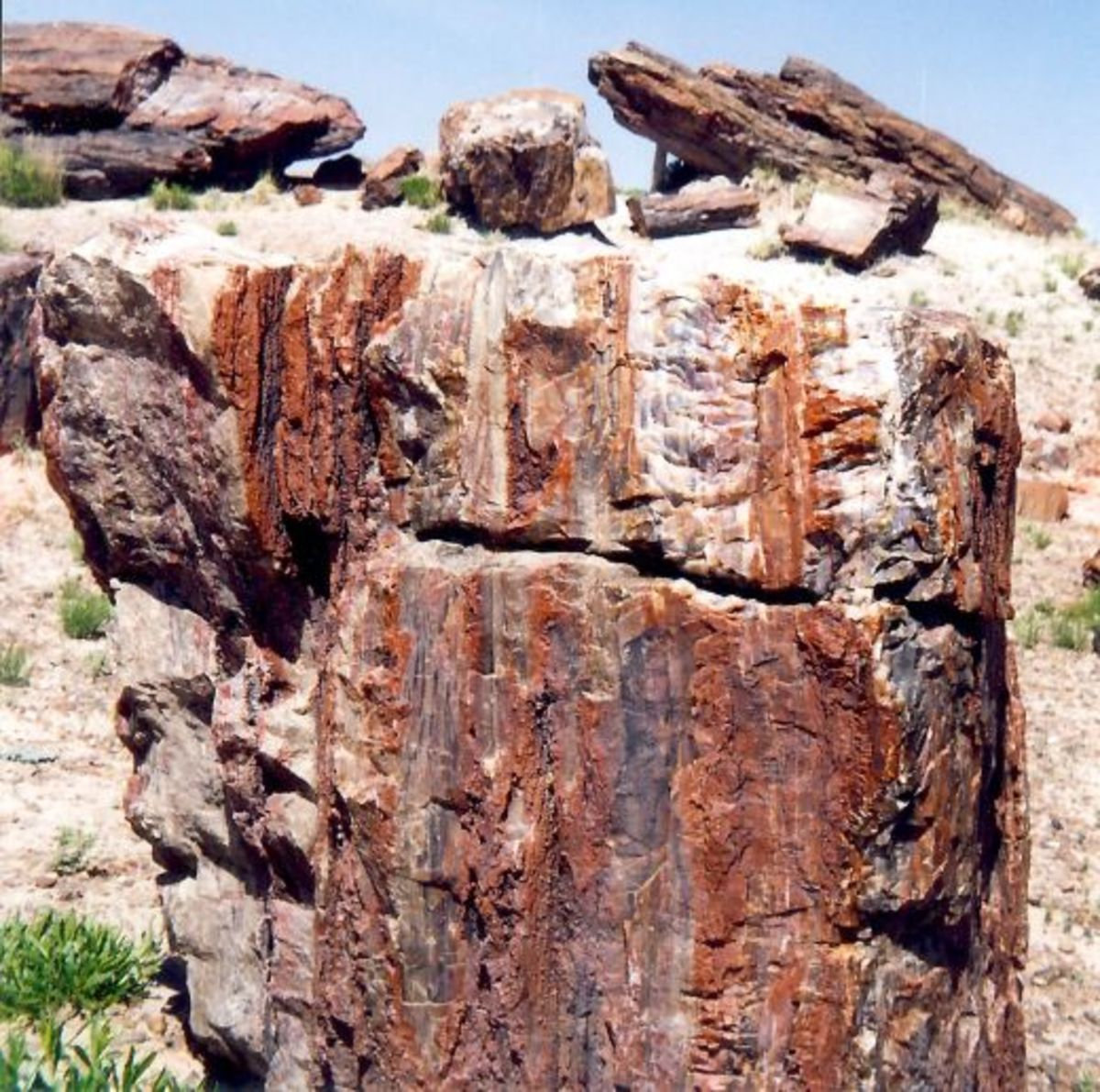 Massive amounts of Petrified wood found in the Petrified Forest National Park