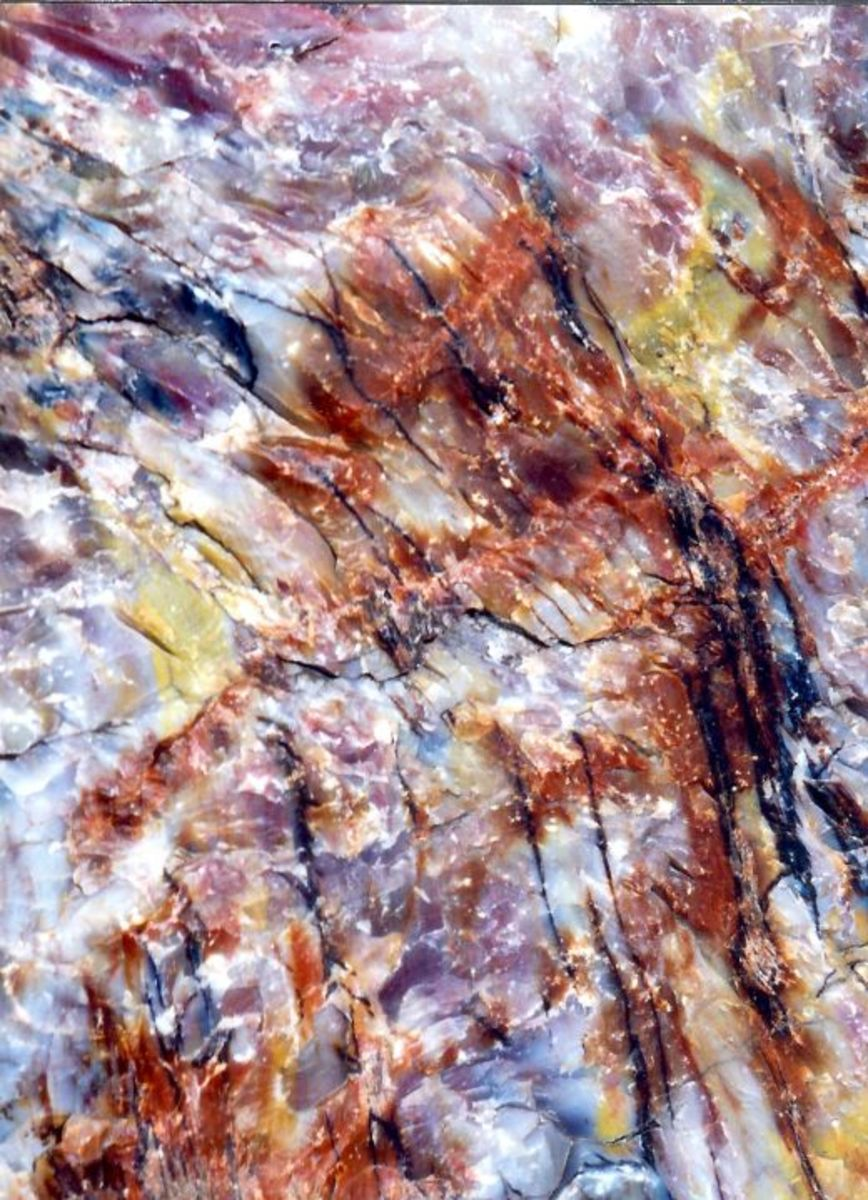 Closeup of the beautiful colors in petrified wood