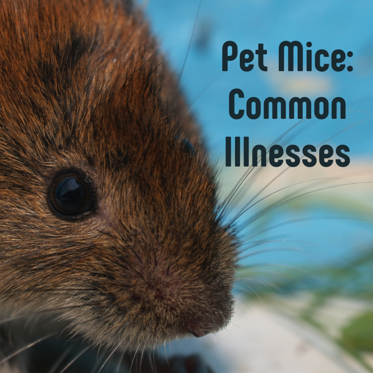 How to Spot a Sick Mouse: Common Illnesses in Pet Mice
