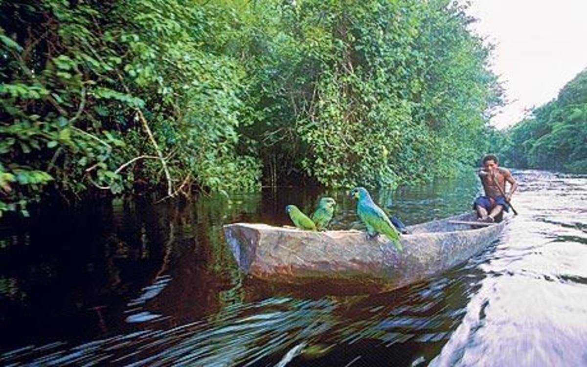 A dug out canoe making its way up one of Guyana's many waterways.