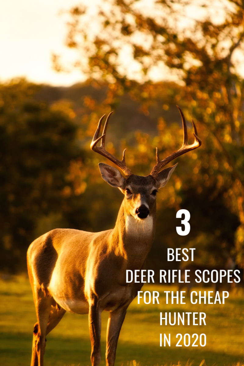 Best 3 Deer Rifle Scopes for Cheap: Under $100 for 2020
