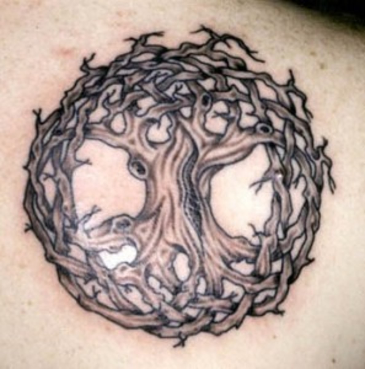 Celtic Tree Tattoo Designs