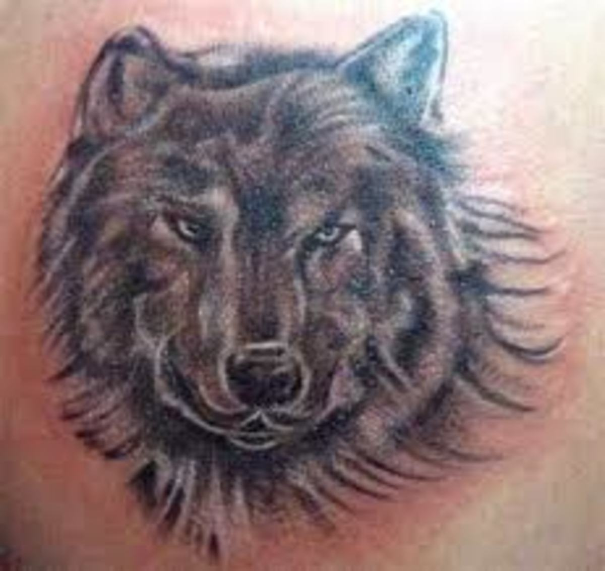 Wolf Tattoos And Meanings-Wolf Tattoo Designs And Ideas