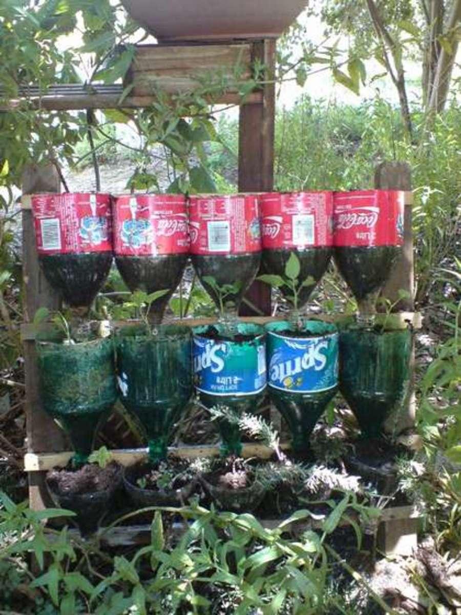 Bottled Herb Garden created by Instructables' user Njacksx