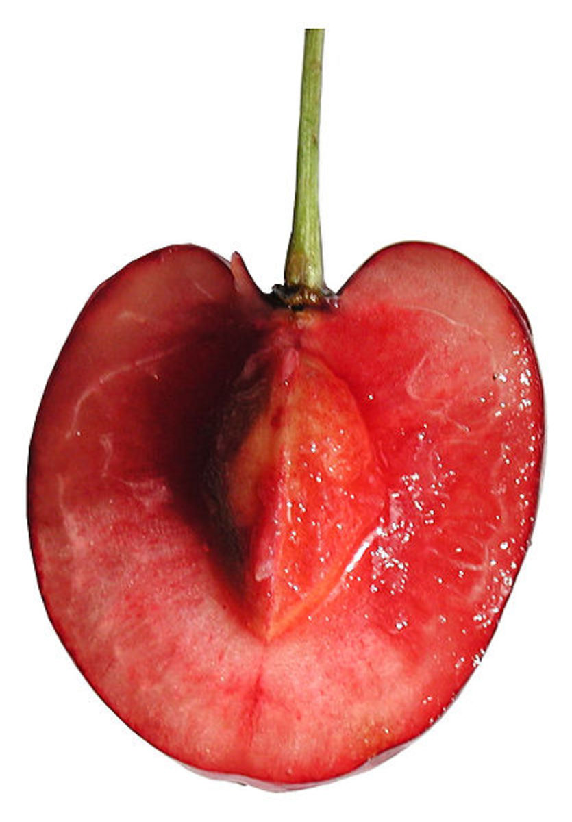 Cherry Cross Section