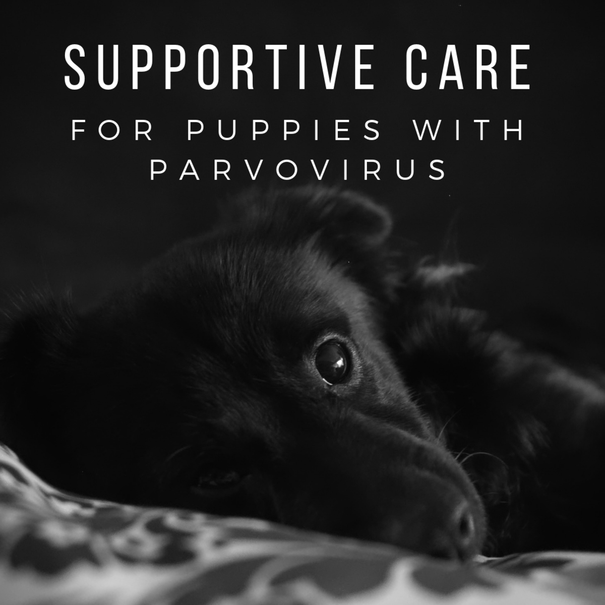 How to help your puppy recover from parvovirus at home.