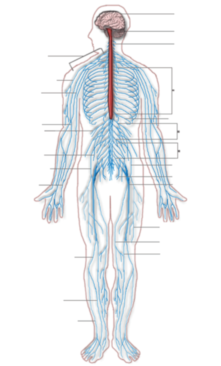 Peripheral Neuropathy: Causes, Symptoms, Diagnosis, Treatment, and Prevention