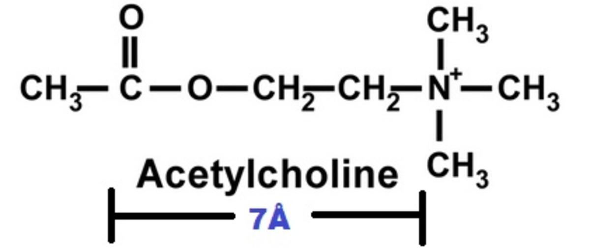 Size of an Acetylcholine molecule is 7Å!