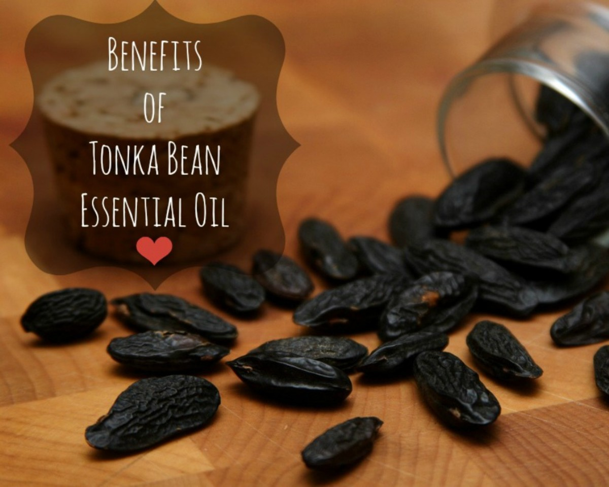 Tonka bean oil is mostly known for its high coumarin content, but it has other useful properties, too, as we shall explore here. (Image edited by healthmunsta.)