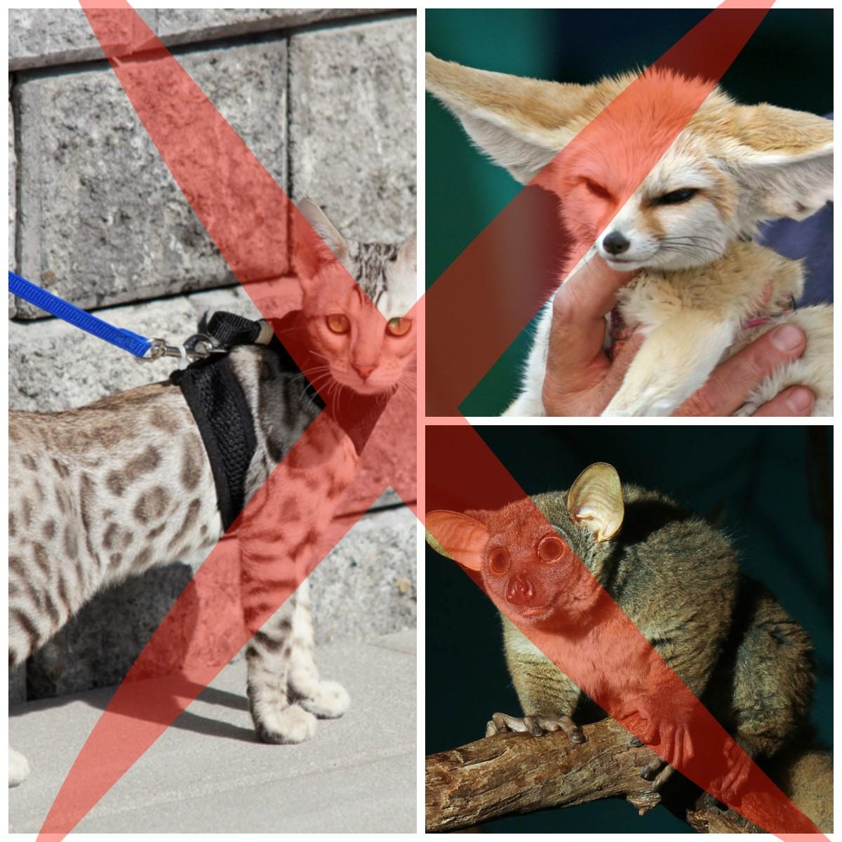 North Carolina Exotic Animal Ban *ALERT* House Bill 554