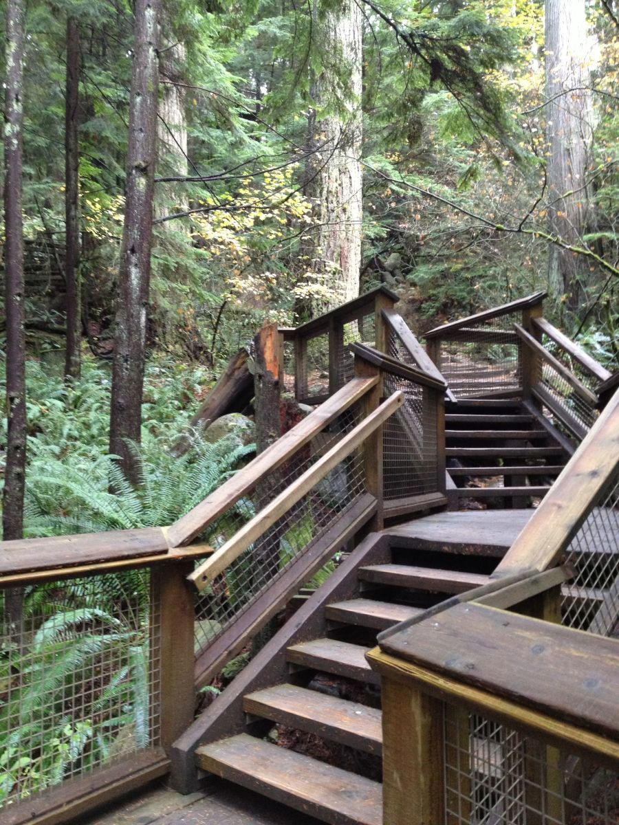 Part of the raised trail of the Treetops Adventure.