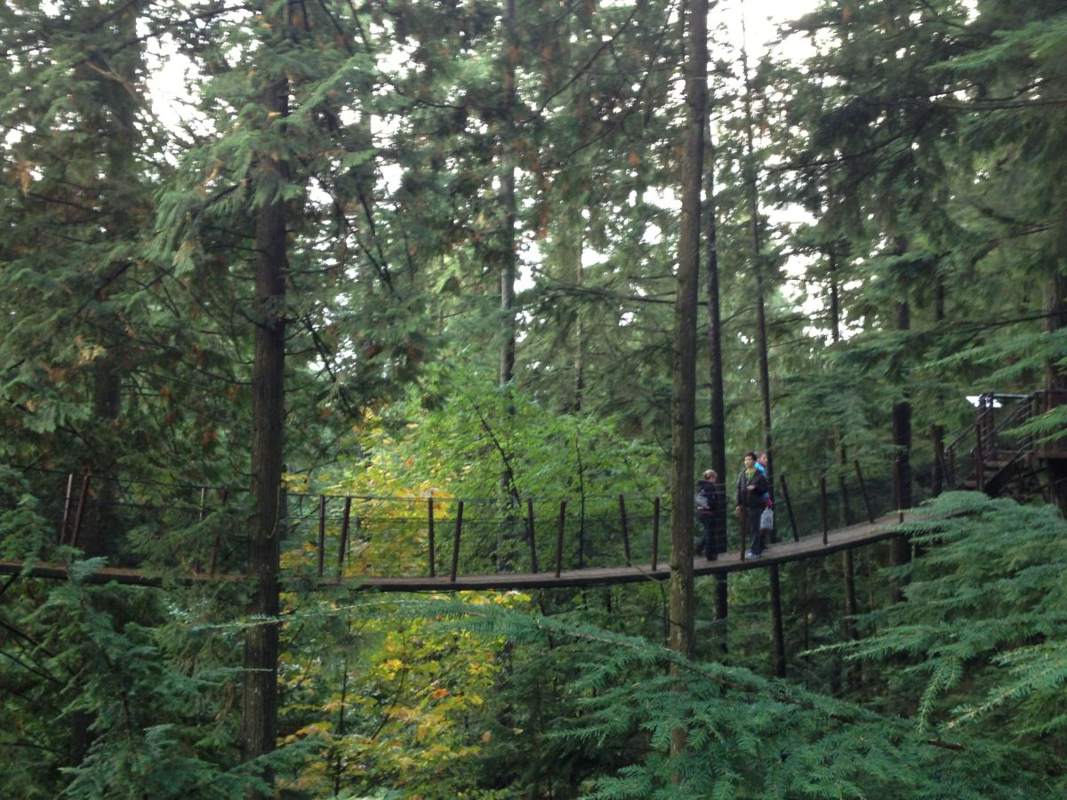 A Treetops Adventure bridge.