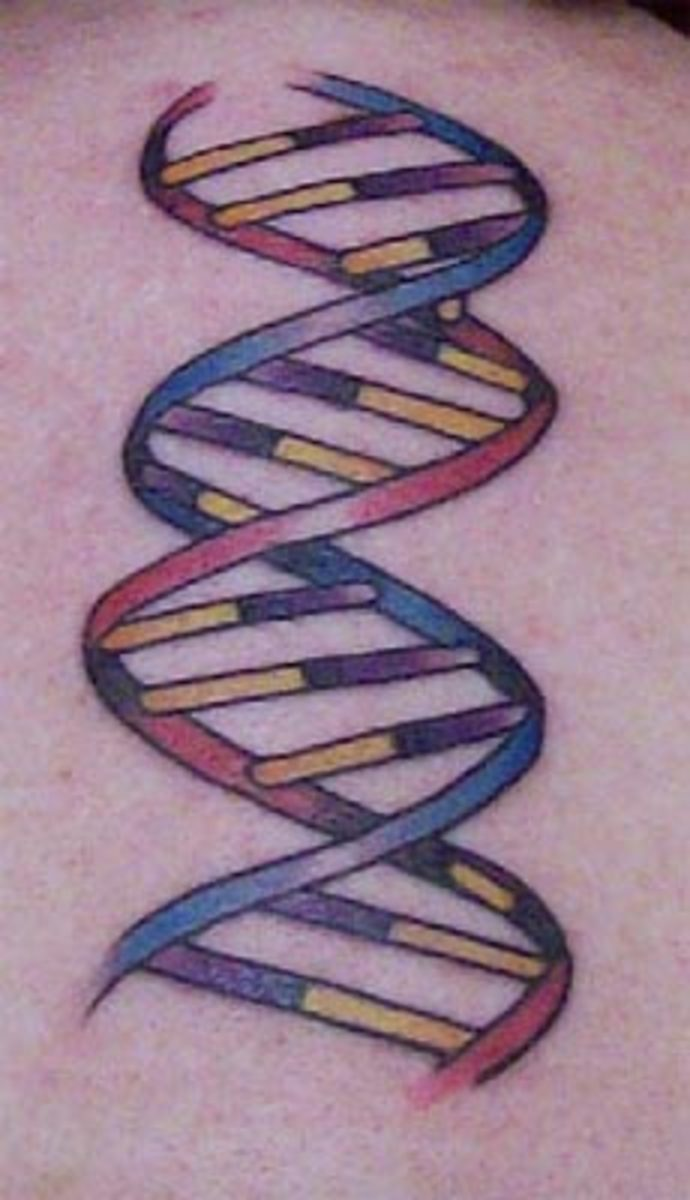 DNA double helix (by Jason Donahue, Idle Hand, San Francisco, CA)