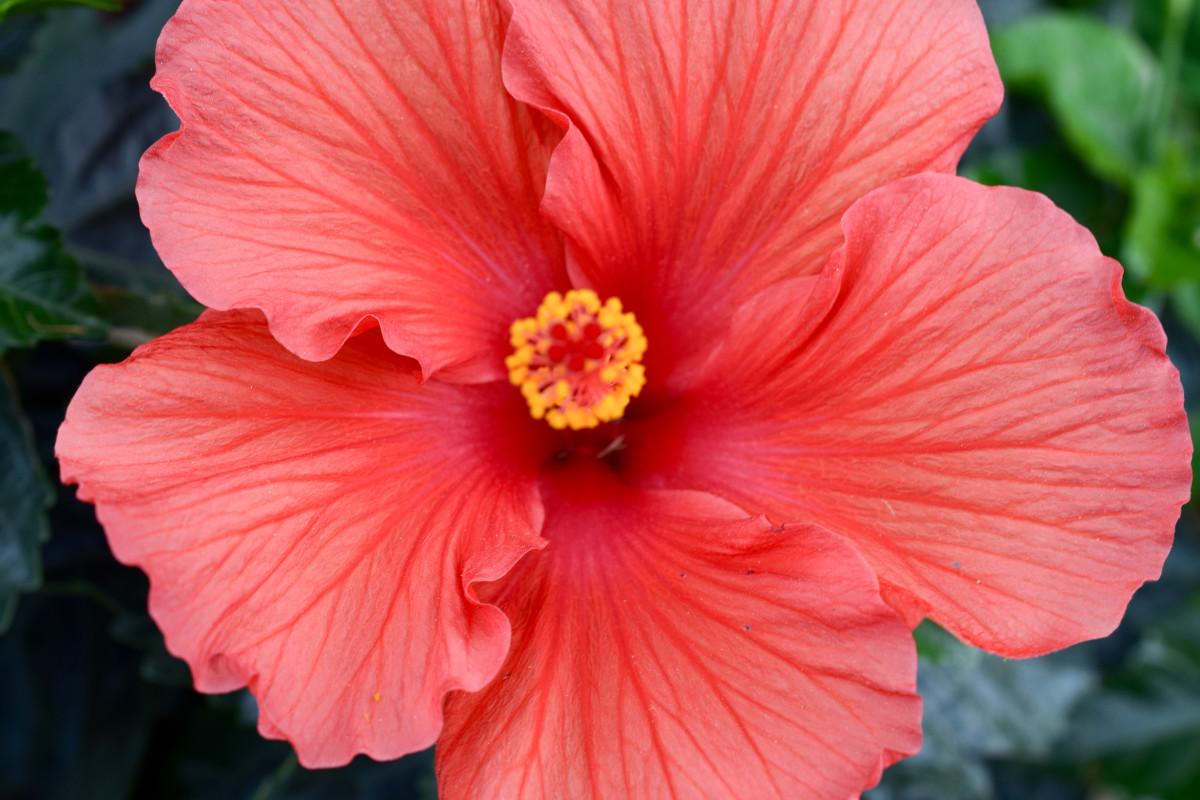 idei-dlya-tatuirovok - Гавайский и Лили цветочные татуировки -  - фото