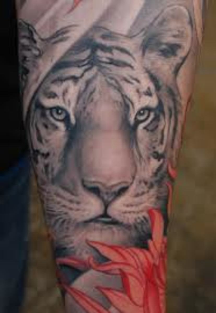6fa2ce387 Tiger Tattoo Designs, Ideas, and Meanings   TatRing