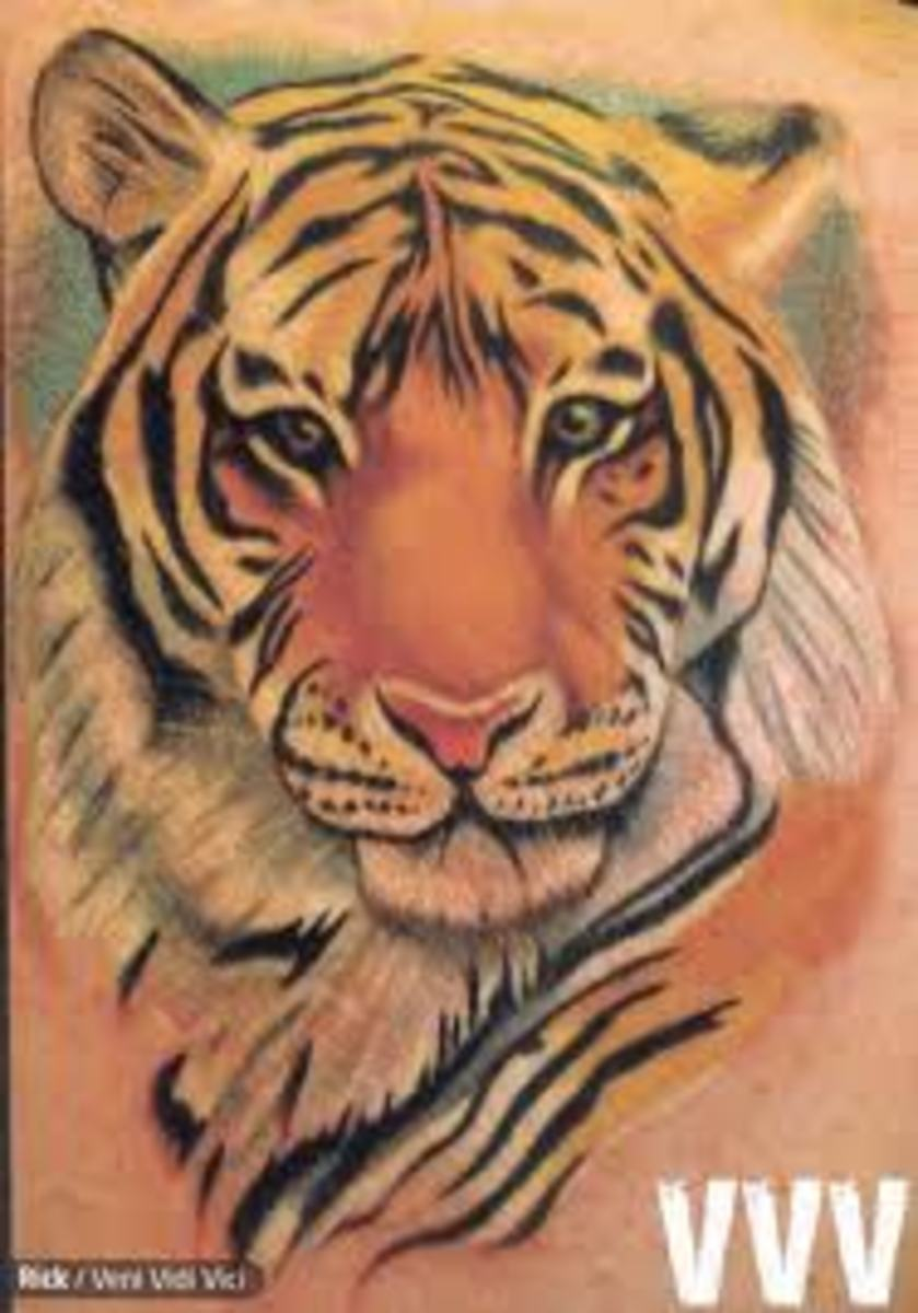 tiger tattoo designs ideas and meanings tatring. Black Bedroom Furniture Sets. Home Design Ideas