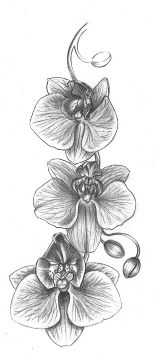 Gallery For gt Cattleya Flower Tattoo Designs