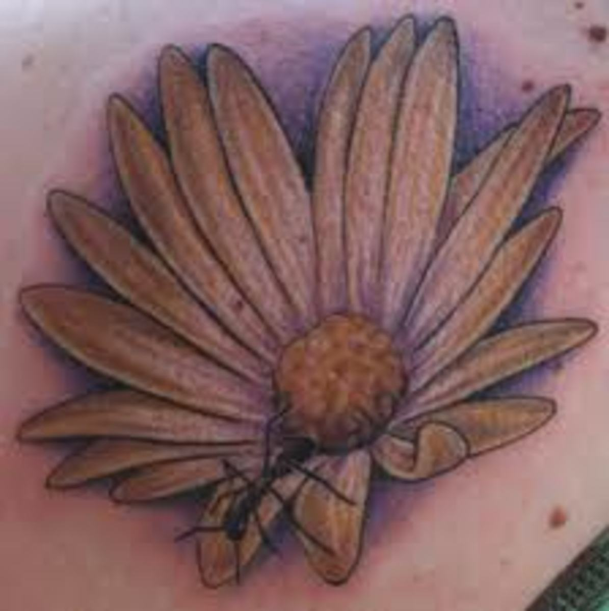 Daisy Flower Tattoo Designs Tatring Tattoos Piercings