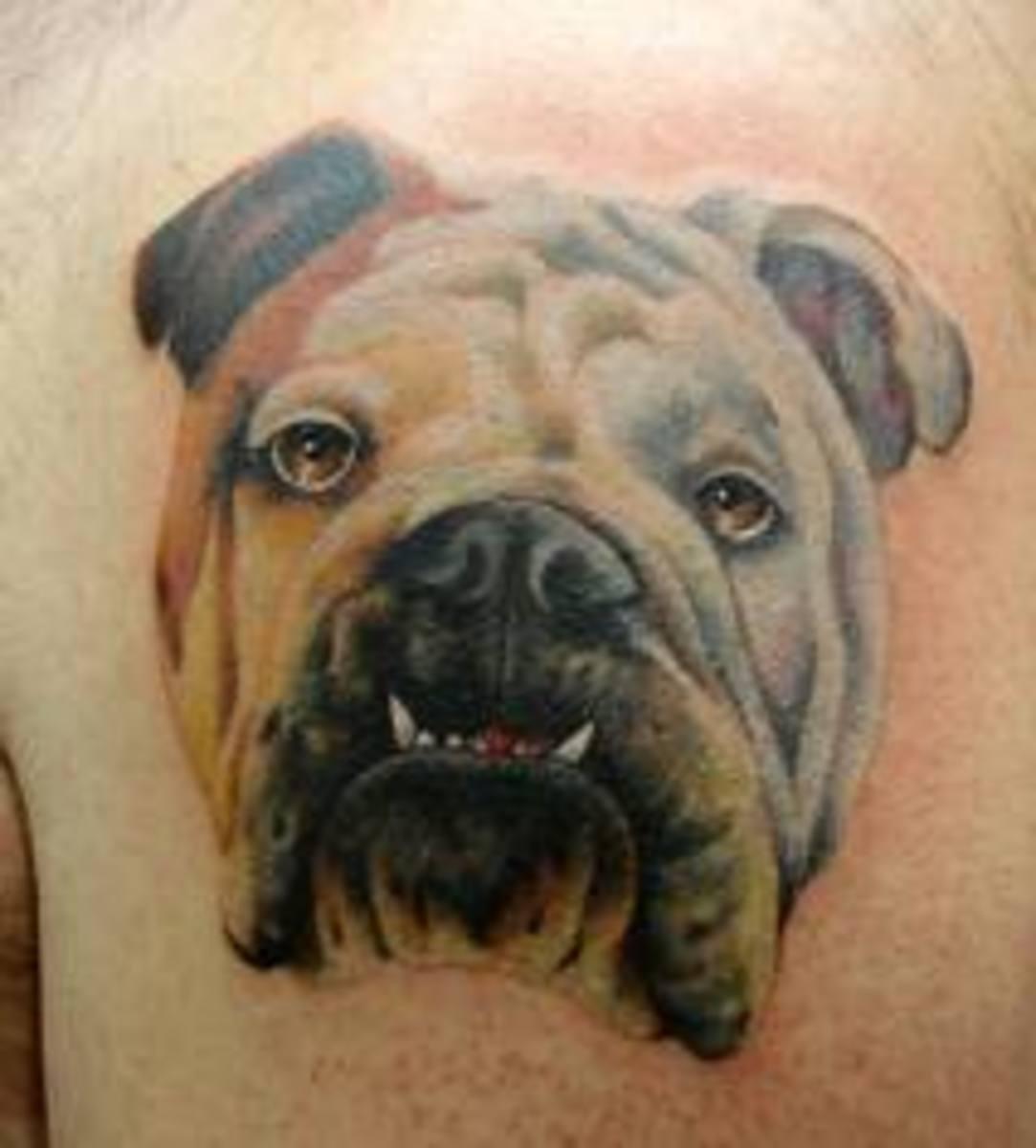 Bulldog Tattoo Designs, Meanings, and Ideas | TatRing
