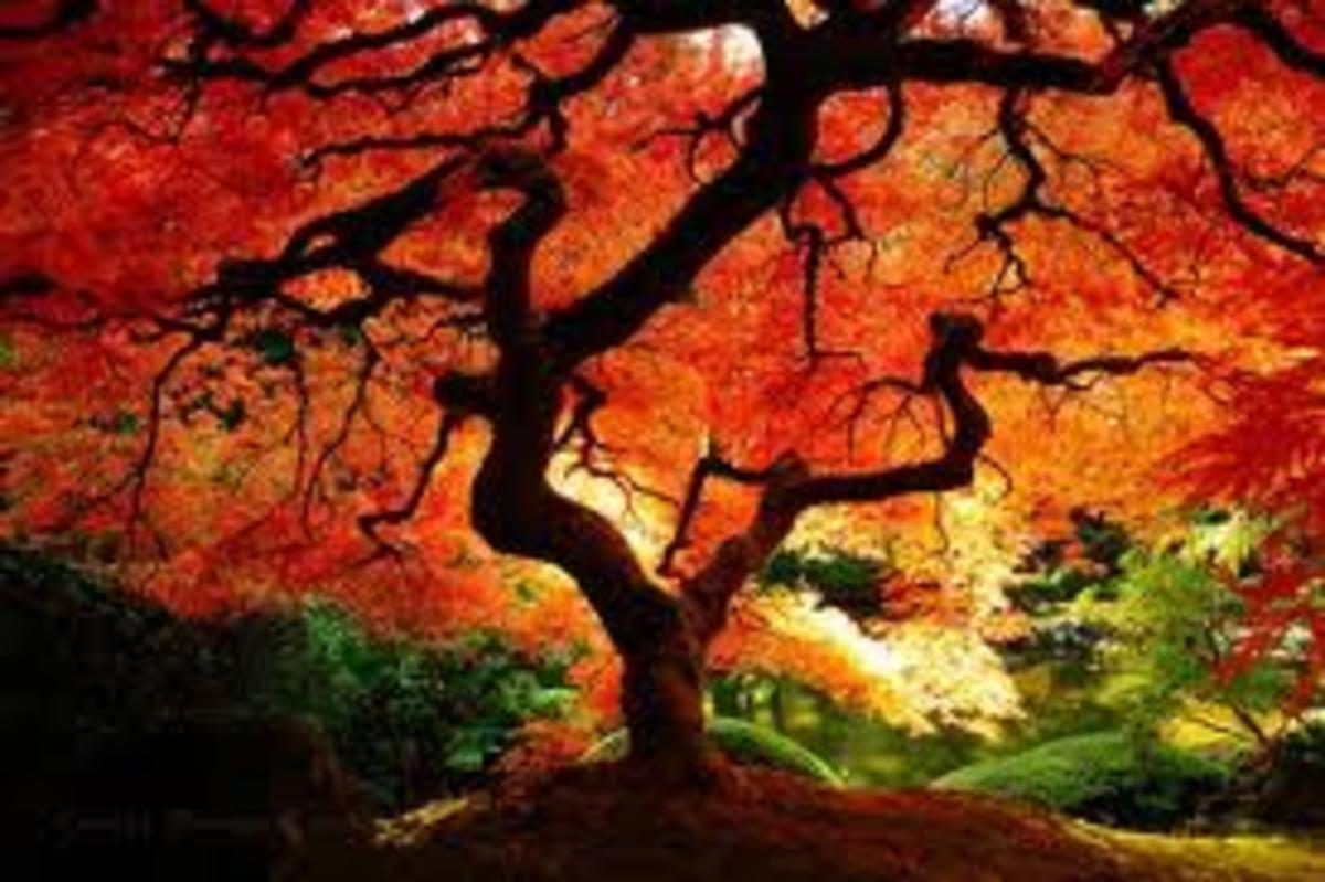 Striking fall colors.