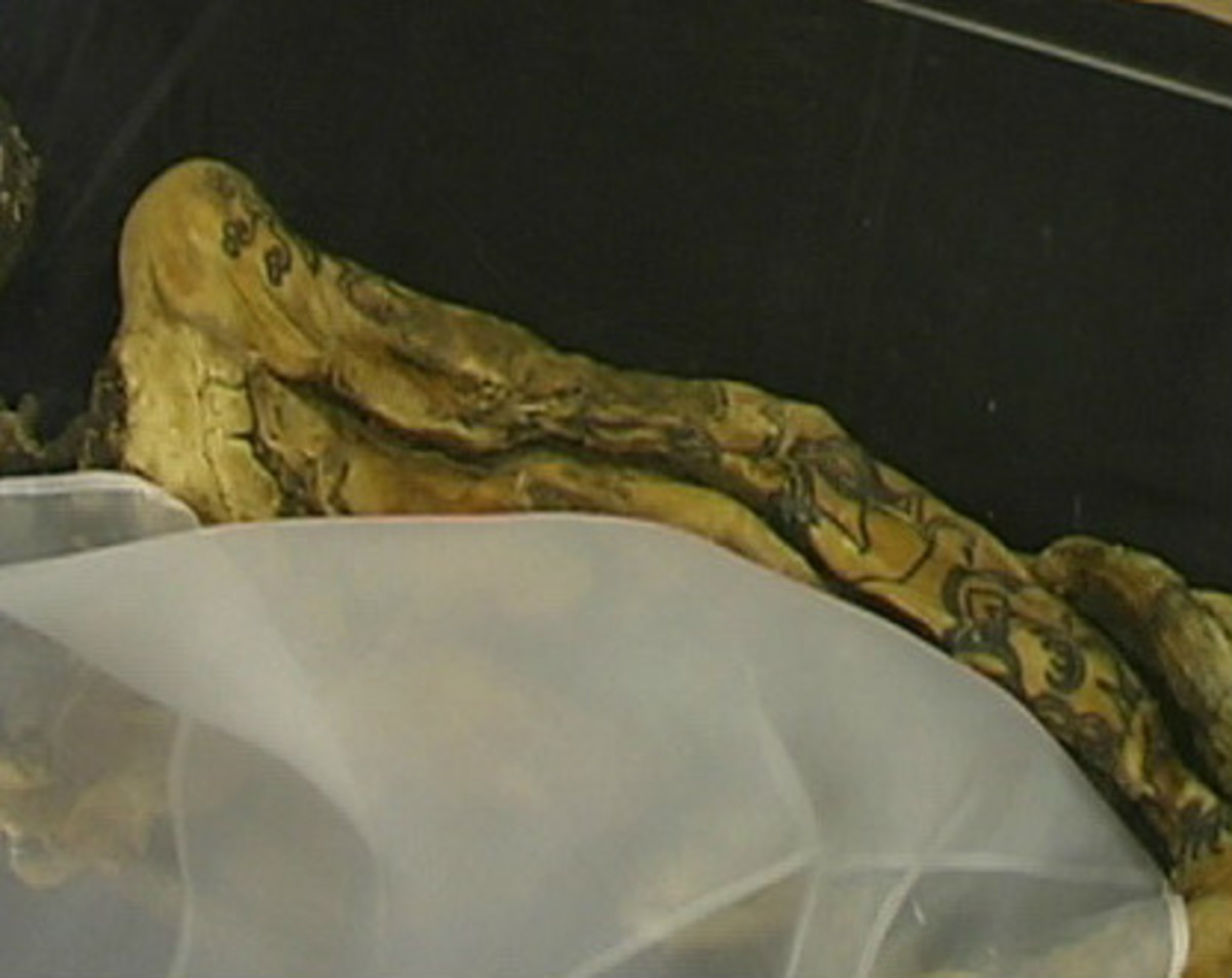 A 2,500 year old female mummy, called the Princess of the Altai, with visible tattoos on both arms and all fingers. The mummy was found in 1993 on a remote Siberian plateau.