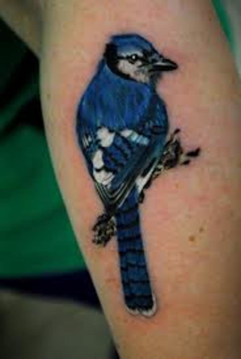 Blue Jay Tattoo Meanings & Designs | TatRing
