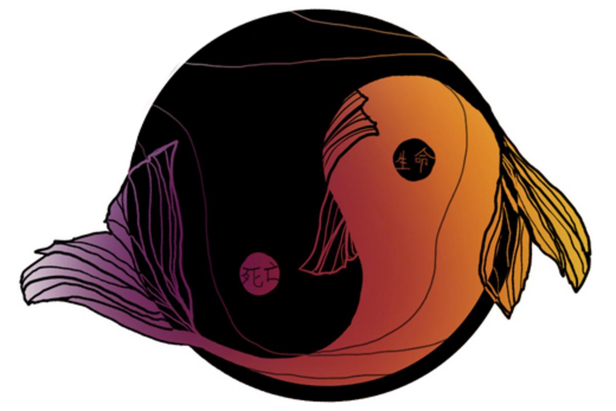 Yin-Yang koi fish tattoo.