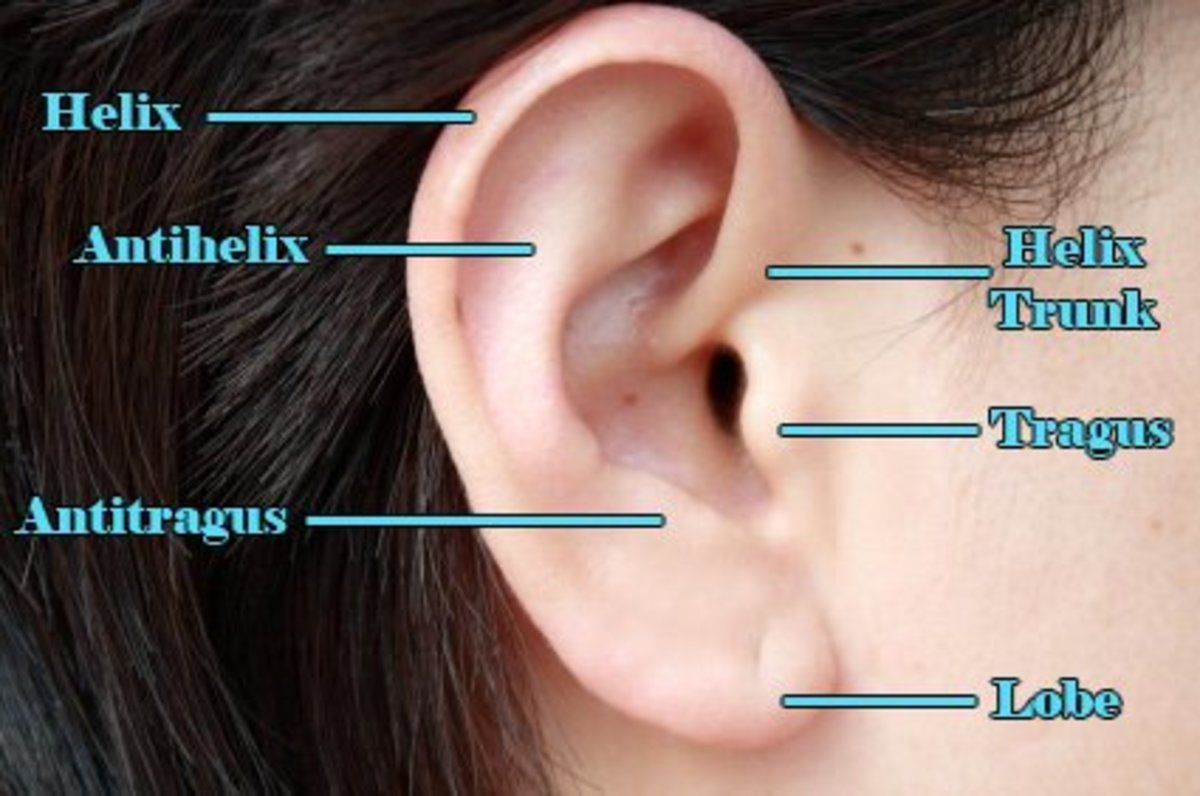 "The ""Helix Trunk"" is another name for forward helix. These are some of the many types of ear piercings around the same region."