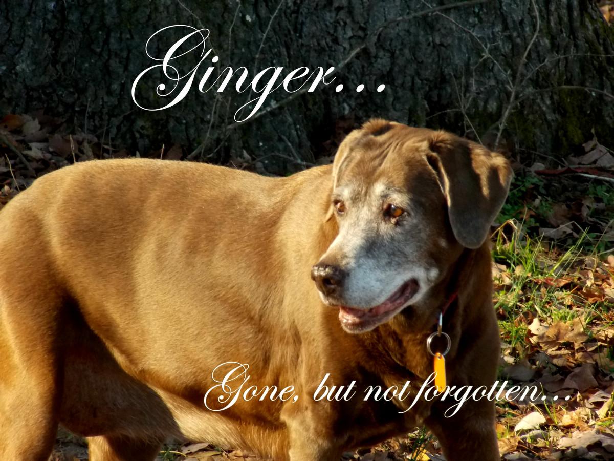 My Ginger girl: gone, but not forgotten.
