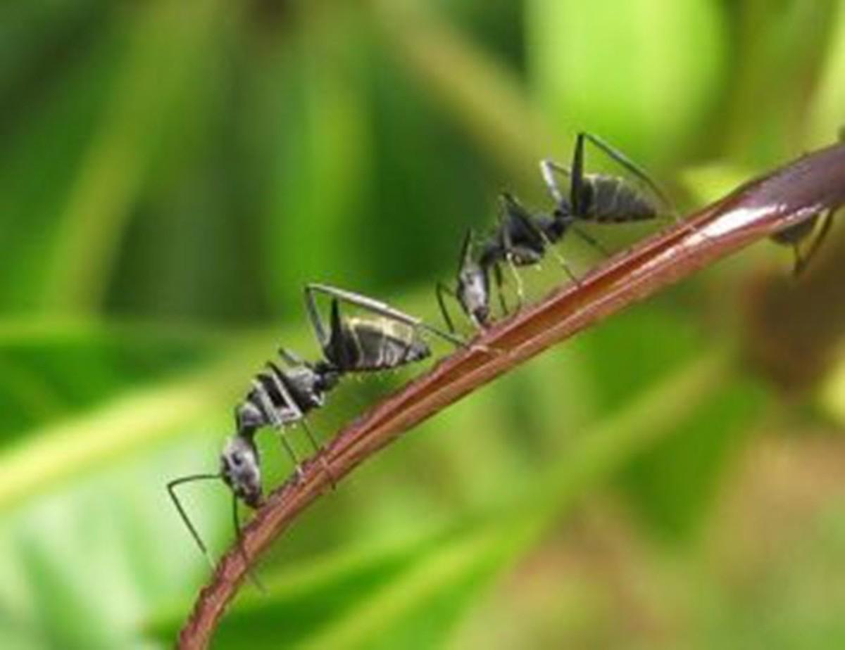 Are Ants Intelligent?
