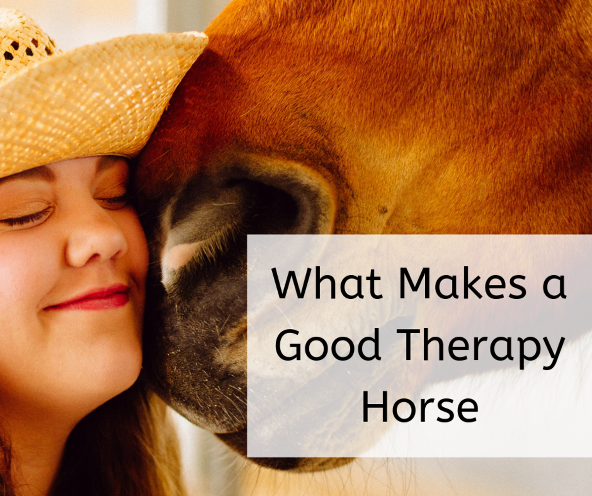 Would Your Horse Make a Good Therapy Horse?