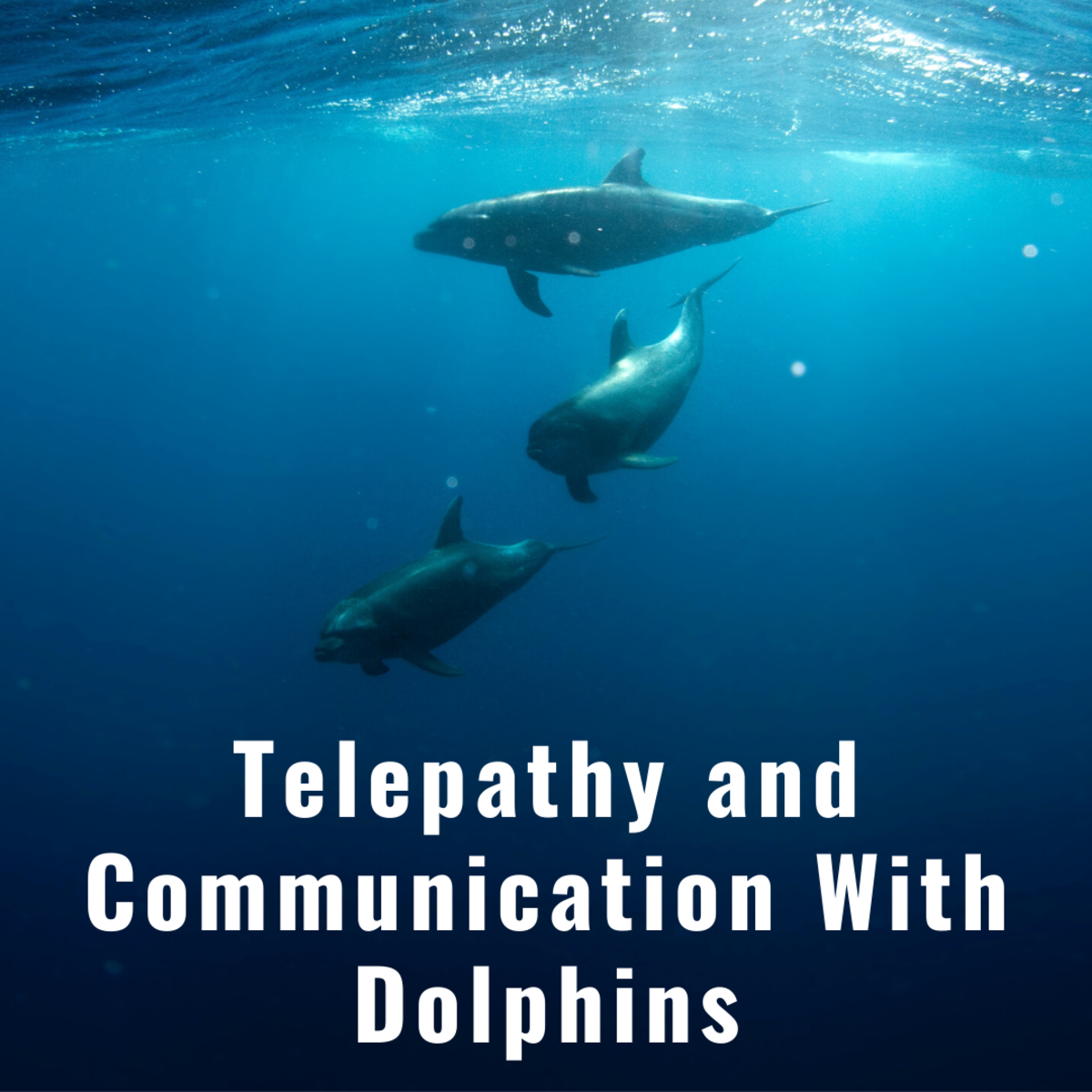 Telepathy and Communication With Dolphins