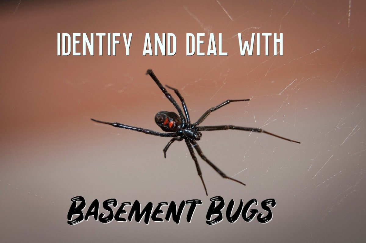 How to Identify and Deal With Basement Bugs