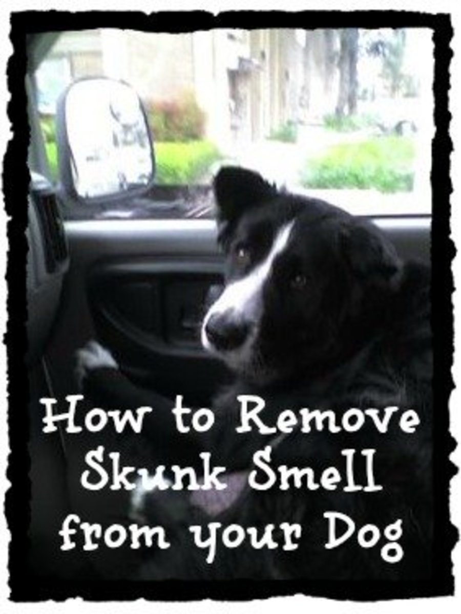 How to Remove the Skunk Odor From a Dog