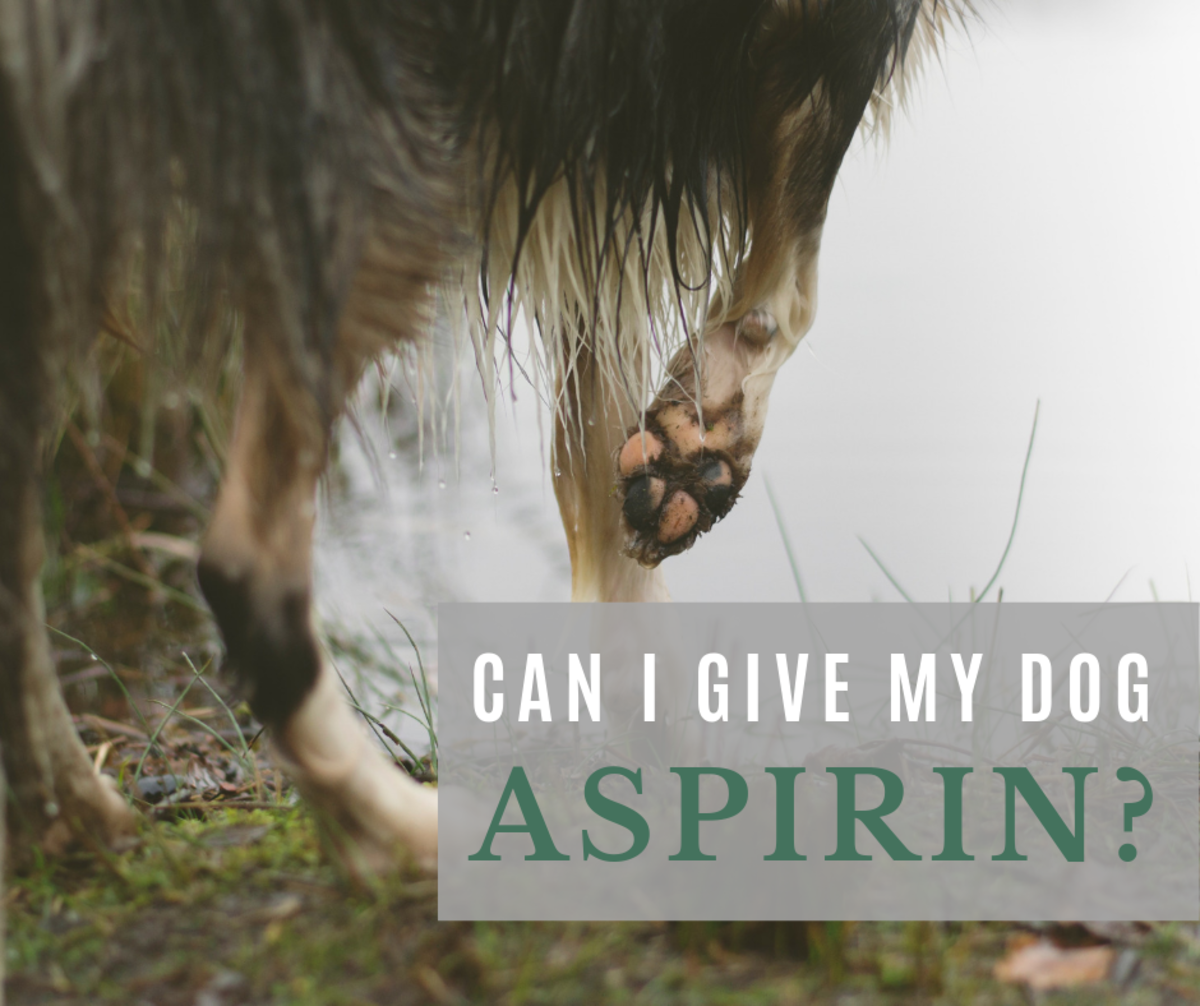 Yes, in fact, aspirin is often prescribed for limping dogs.