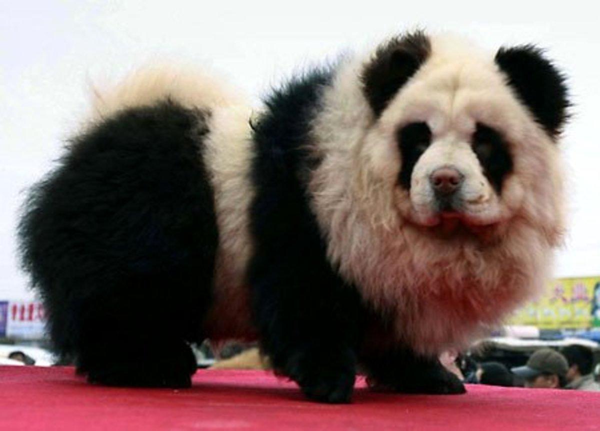 Panda Dog—A New