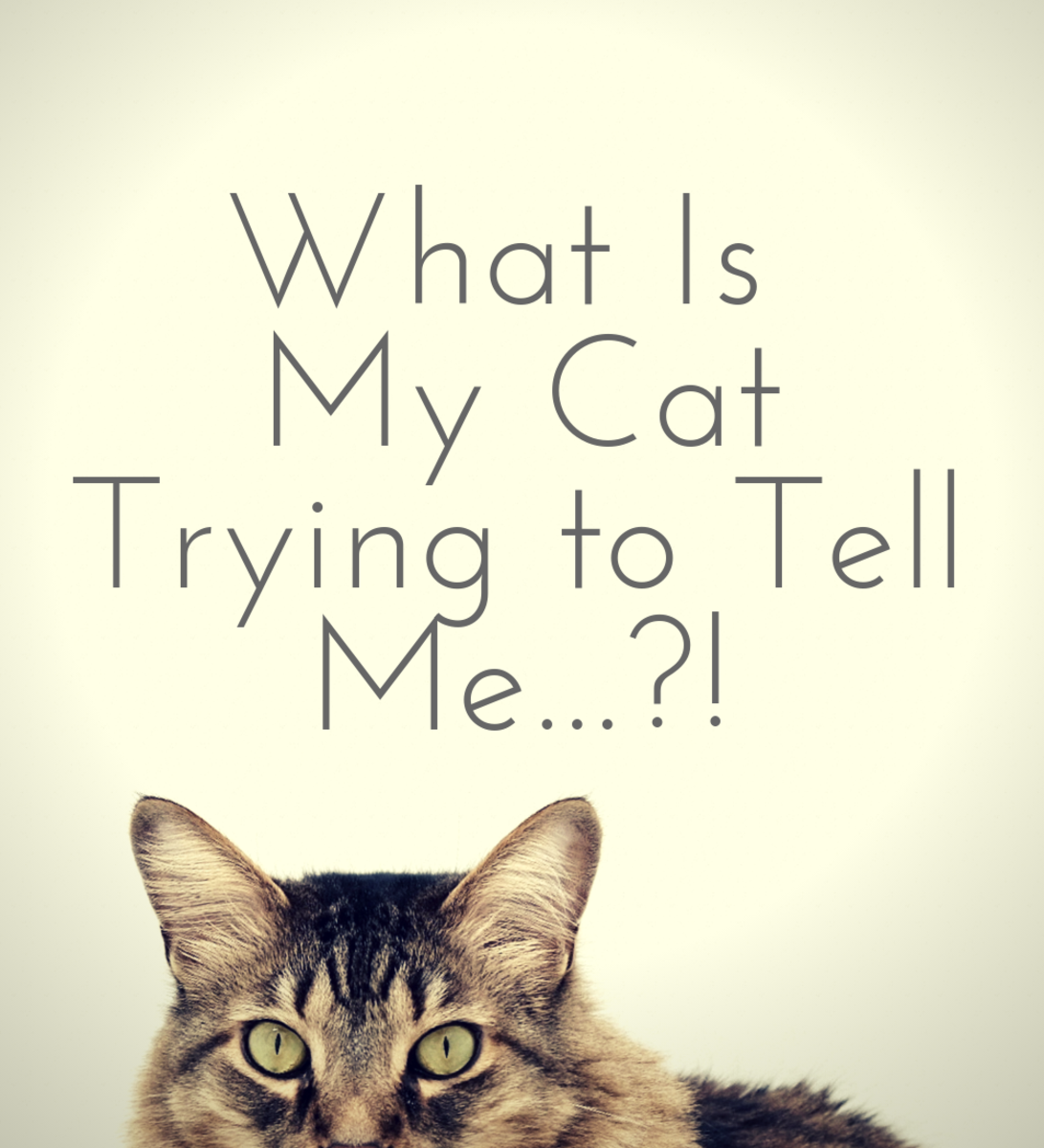 Why Is My Cat so Affectionate? Understanding a Cat's Body Language