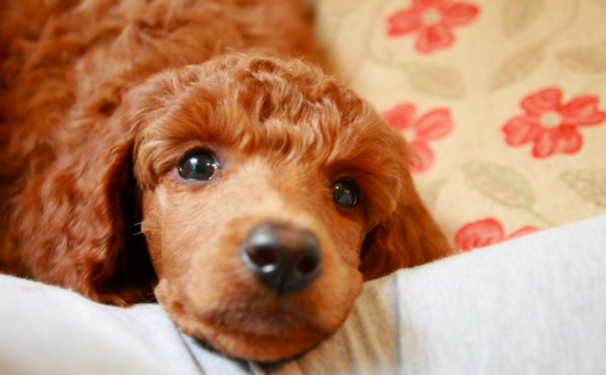 Cute Names for Pets | PetHelpful