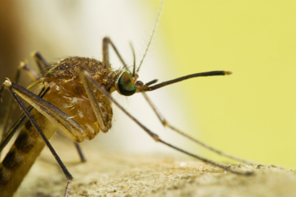 How to Repel Mosquitoes - Mosquito Repellents