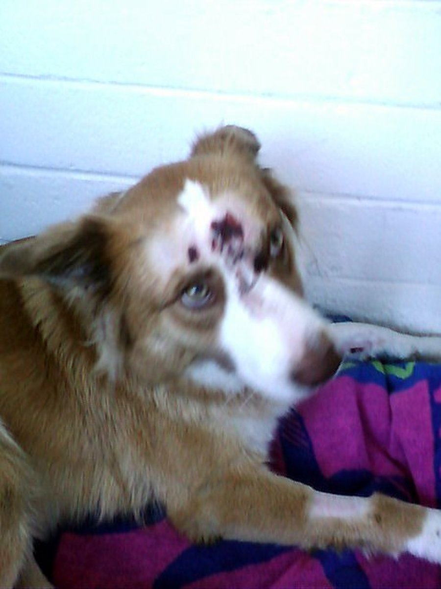 My poor baby Karma looks awful—you can tell what a traumatic experience getting hit by a car was.
