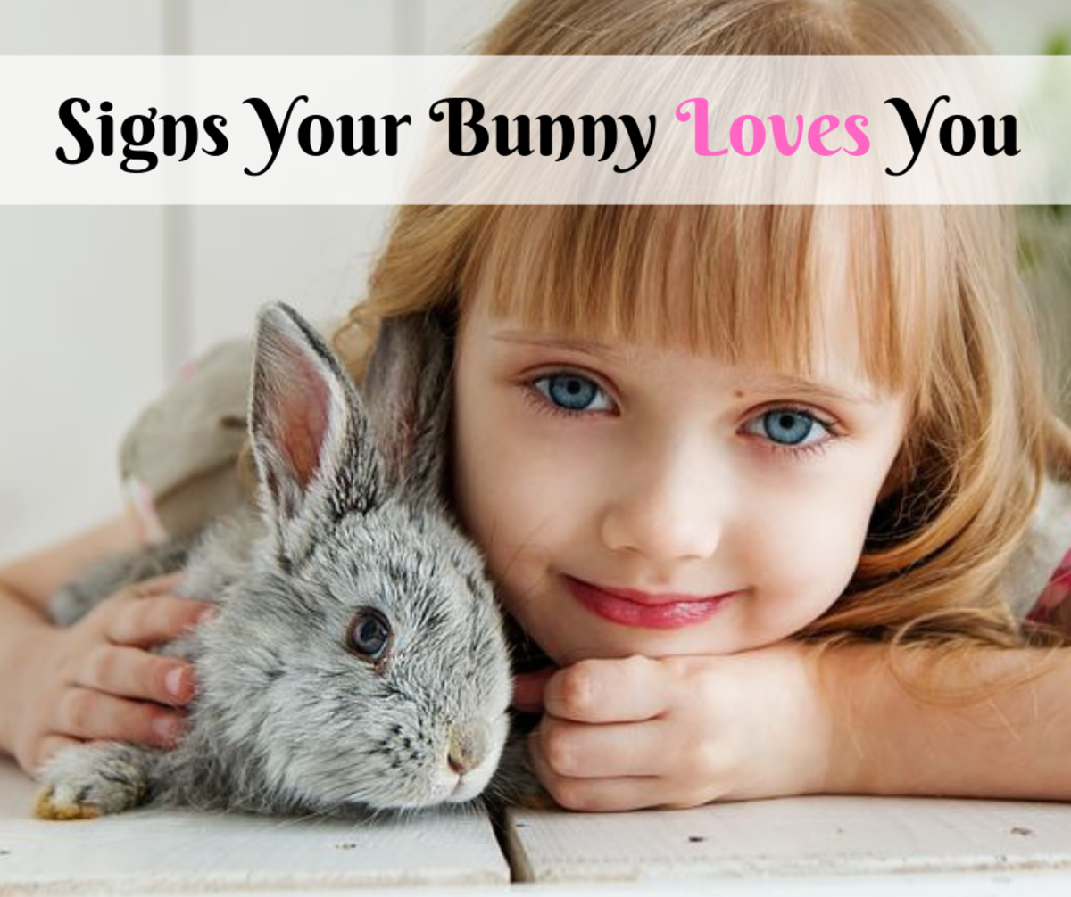 Bunnies can be quiet animals that are hard to read, but there are a few ways your pet rabbit can show you that they care about you.