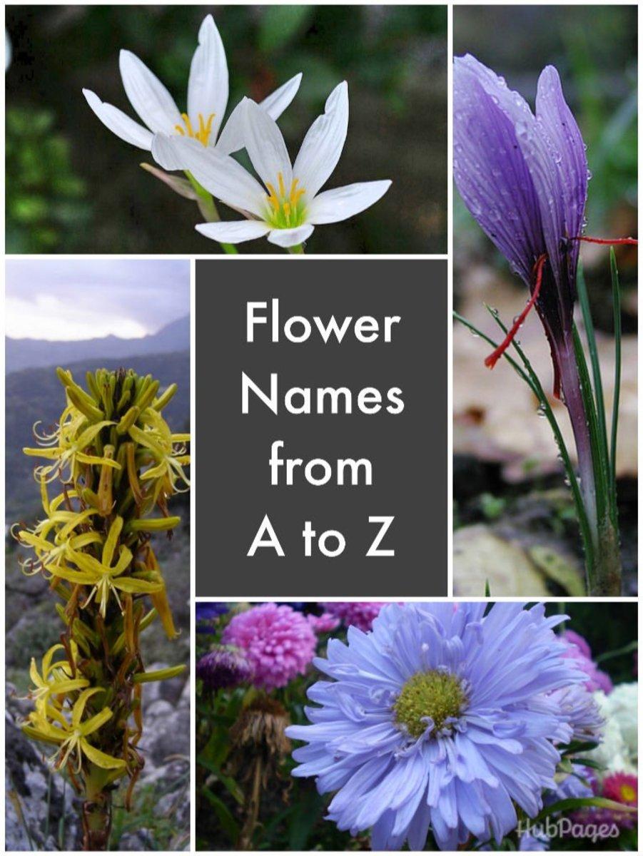 List Of Flower Names