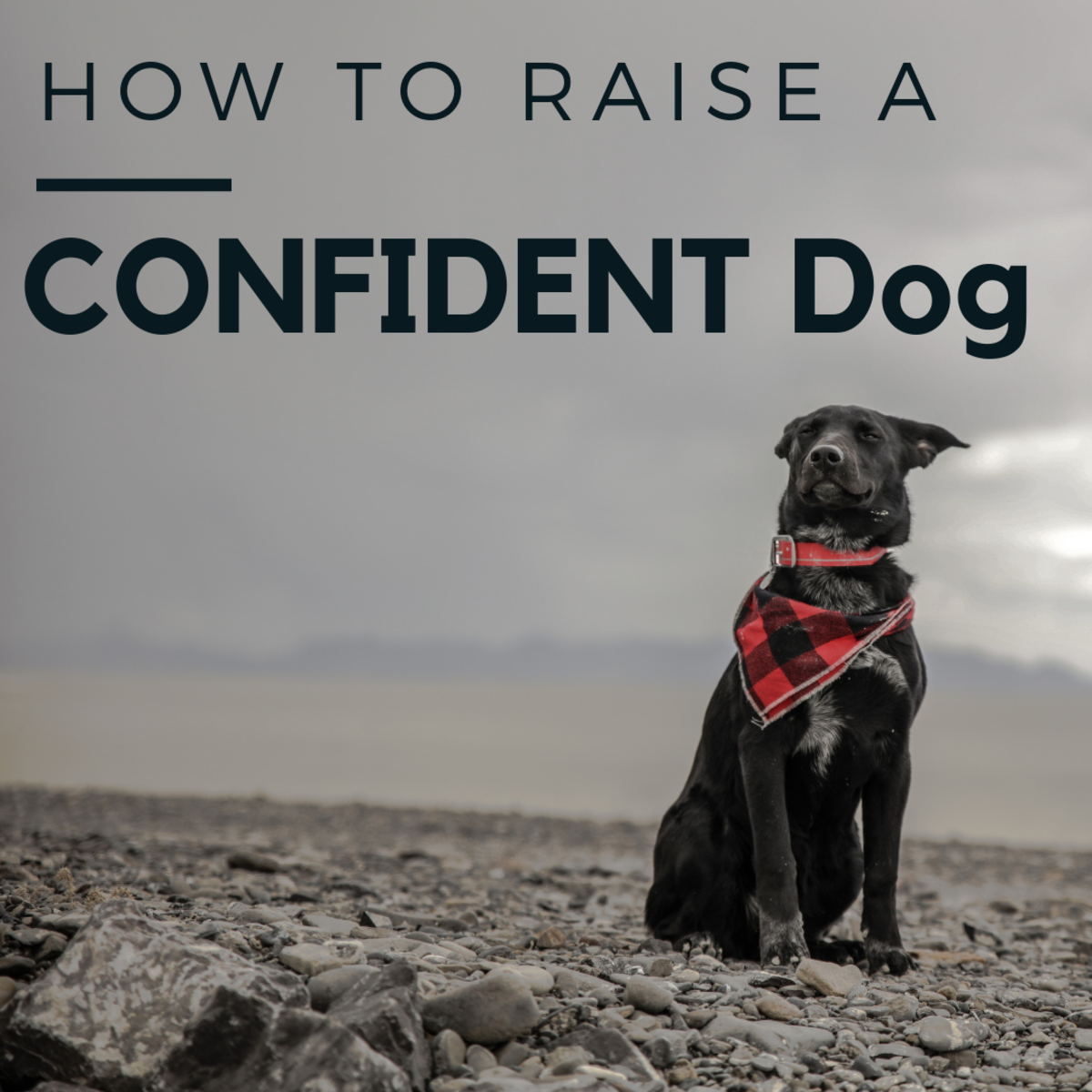 How to Encourage Confidence in Your Dog
