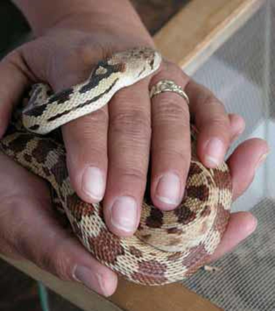 The Best Breeds of Snakes to Have as Pets