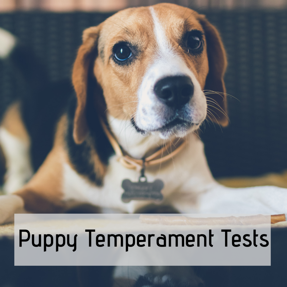 Temperament Tests for Picking a Puppy