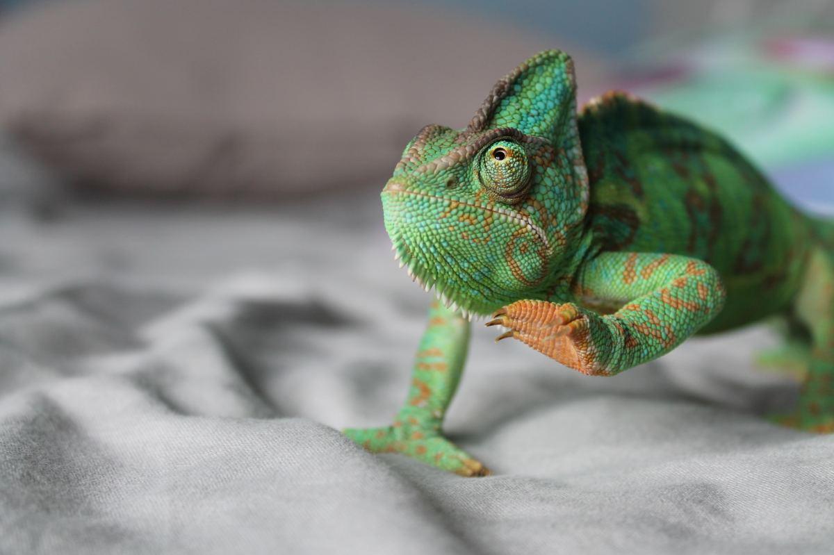 UV light stimulates the converson of previtamin D to vitamin D in reptiles.