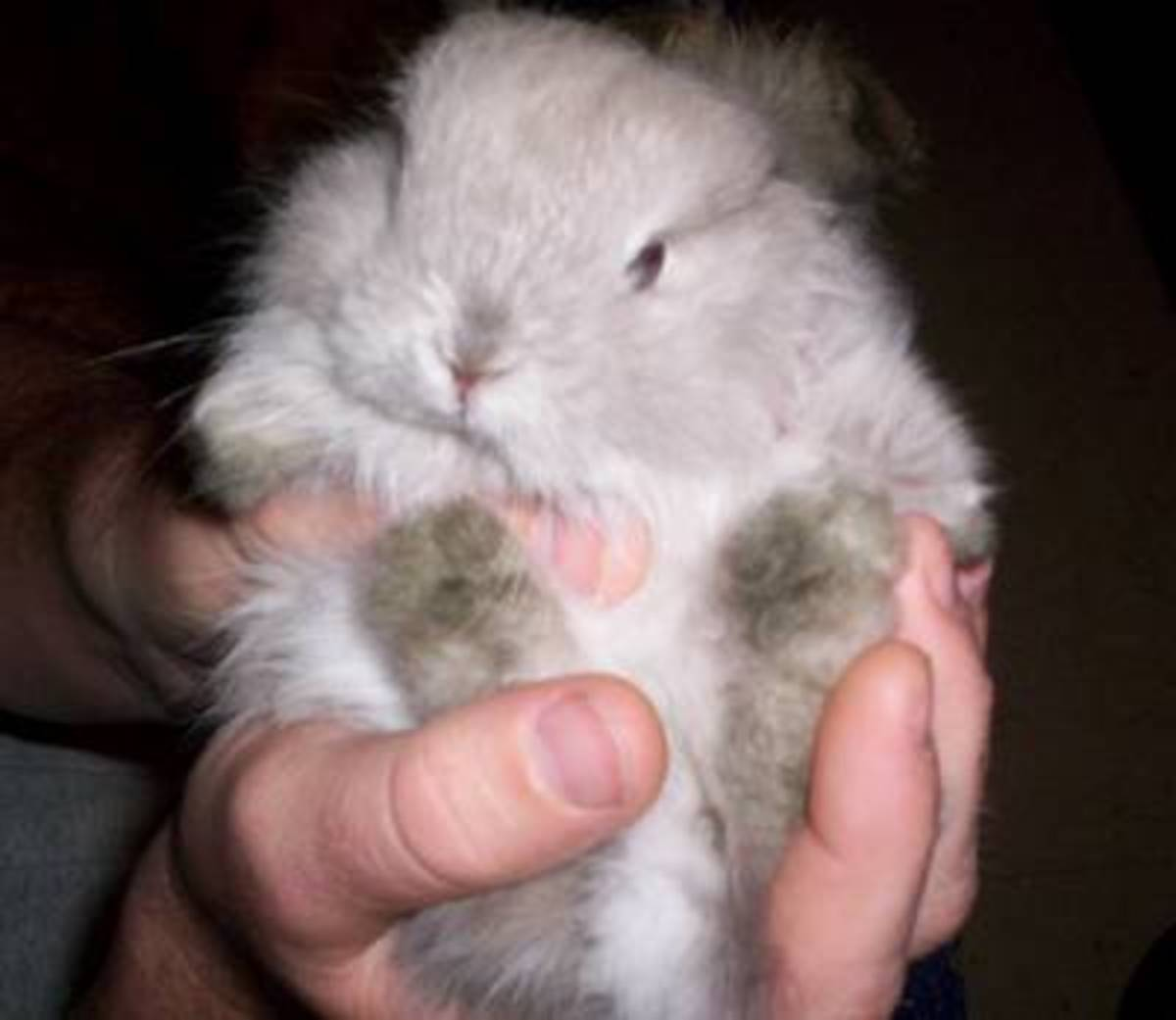 Baby Jersey Woolly Bunny