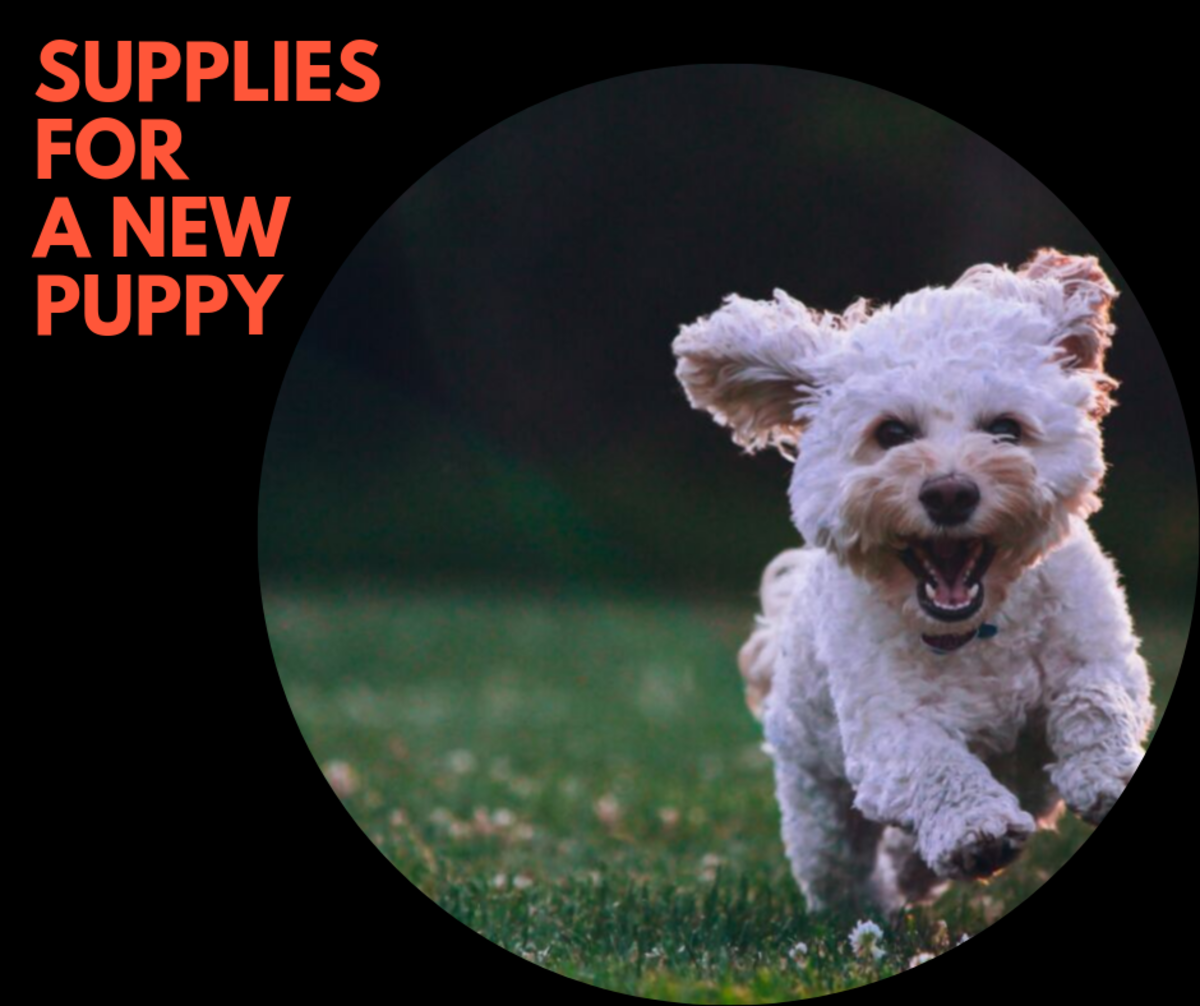 Must Have Supplies for a Puppy