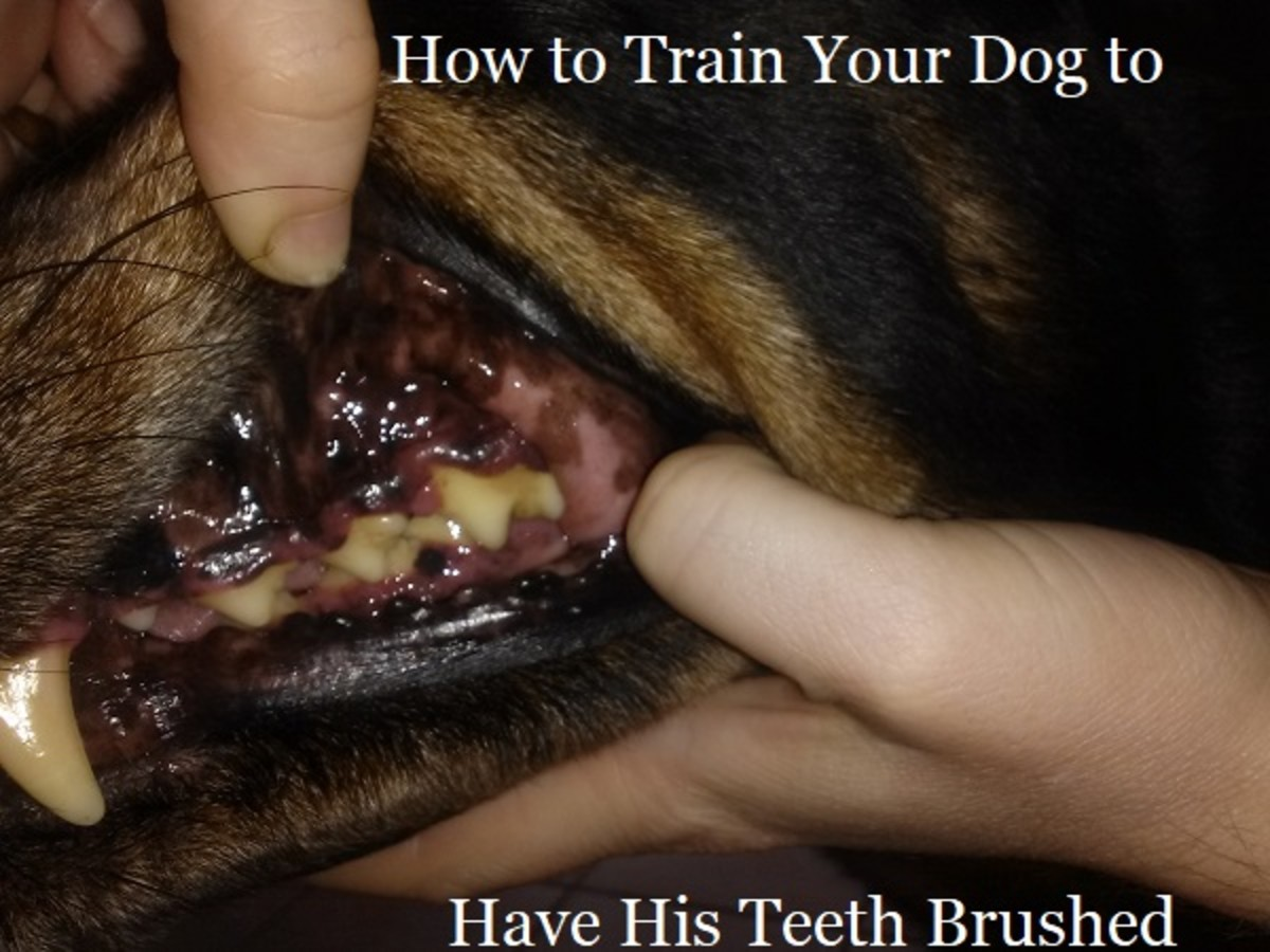 How to Train Your Dog to Brush His Teeth