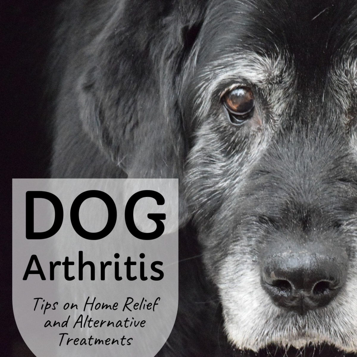 Home Remedies and Alternative Treatments for Dog Arthritis